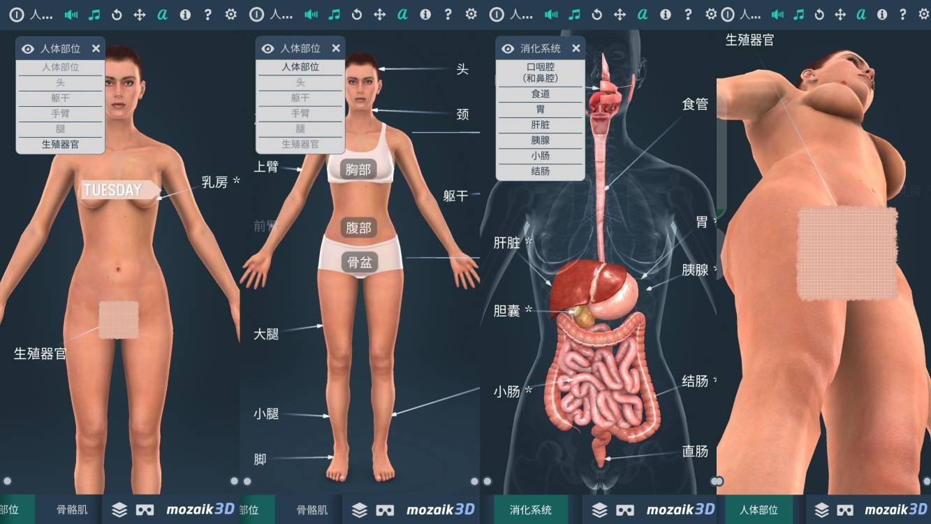 人体系统女性3D-充满乐趣的体验
